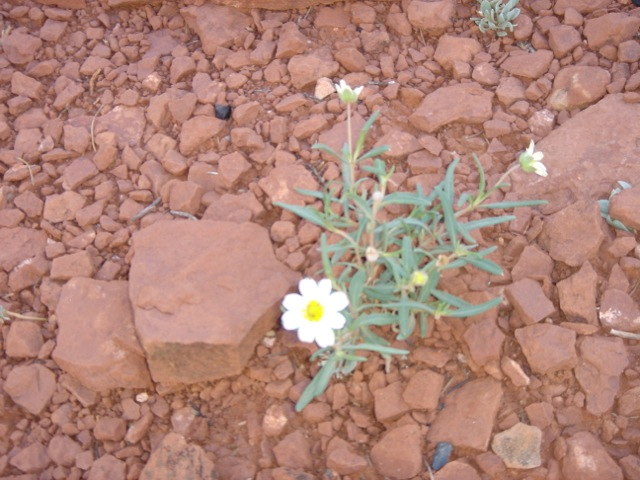 Even in the desert , even with no water , life begins again ....